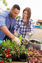 Mixed race couple planting rooftop garden together Stock Photography