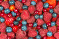 Mixed summer berries background Royalty Free Stock Photo