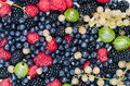Mixed summer berries Royalty Free Stock Photo