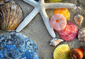 Mixing colorful of shell fish on the beach Royalty Free Stock Photo