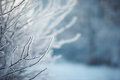 Mizzle on branches ice in the winter morning Stock Photography