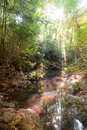 Moat in forest landscape with the morning Stock Photos