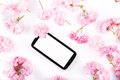 Mobil smart phone surrounded by pink cherry flowers on light background Royalty Free Stock Image