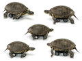 Mobile turtle set of over white backgrounds Royalty Free Stock Photos