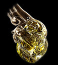 Model of human heart Stock Image