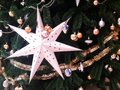 Modelo del árbol de navidad Imágenes de archivo libres de regalías