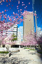 Modern architecture in the business district of la defense pari sakura blossom on background skyscrapers défense quarter Stock Images