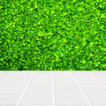 Modern beige mosaic with the wall made of four-leaf plant green Royalty Free Stock Photo