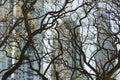 Ritorto albero