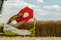 Modern claas combine harvester header cutting crops oilseed rape working the field close up of Royalty Free Stock Photo