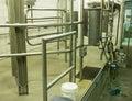 Modern Dairy Farm Cow Milking Stall Royalty Free Stock Photo