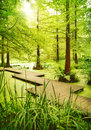Modern footpath or gangplank over a pond in the woods old trees standing in moor swamp in the forest sunbeam and smooth light Stock Photos