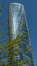 Modern glass highrise building tree Royalty Free Stock Photo