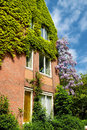Modern House covered  with ivy Stock Photo