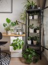Modern industrial black and white study room with numerous green houseplants such as pancake plants and cacti Royalty Free Stock Photo