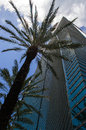 Modern office building a high rise with palm trees in downtown miami Stock Image