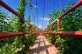 Modern reliable rope suspension bridge. Vietnam Royalty Free Stock Photo