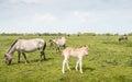 Młody konika koń ciekawie patrzeje wokoło Zdjęcia Stock