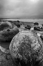 Moeraki boulders on the koekohe beach eastern coast of new zealand hdr image black and white Stock Photos