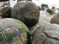 Moeraki boulders in south island new zealand Royalty Free Stock Photo