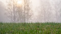 Moist grass sunrise silhouette trees with a and a in the background Royalty Free Stock Photography