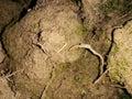 Moist Soil Royalty Free Stock Photo