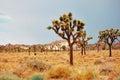 Mojave desert spring in landscape Stock Photos