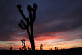 Mojave Desert Sunset