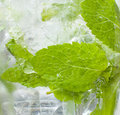 Mojito drink closup of the glass showing mint and bubbles lief surrounded by Stock Photography