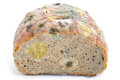 Mold on bread the white background Stock Image