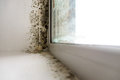 Mold in the corner of the window. Royalty Free Stock Photo