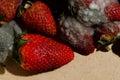 Mold strawberries