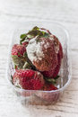 Mold strawberry with fungus in transparent plastic box Stock Photo