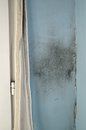 Mold on the wall by window with cracked Royalty Free Stock Photos