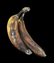 Moldy bananas on black background Stock Photography