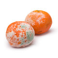 Moldy orange white background Royalty Free Stock Photography