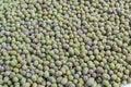 Moldy ymung bean grams close up view Royalty Free Stock Photo