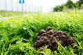 Mole hill on grass Stock Photography
