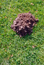 Mole molehill on the grass Stock Image