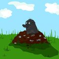 Mole on molehill a small the meadow Stock Images