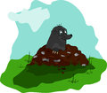 Mole on molehill a small the meadow Stock Image