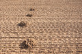 Mole mound a lot of in the plowed land Royalty Free Stock Photos