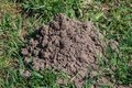 Molehill Royalty Free Stock Image
