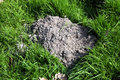 Molehill freshly dug in a meadow by an active mole Royalty Free Stock Photography