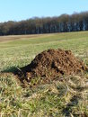 Molehill on meadow a in the background forest Royalty Free Stock Photography