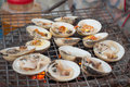 Molluscs in brine with spices over an open fire Stock Images
