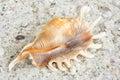 Mollusk Stock Photos