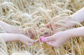 Mom and daughter keep wheat ears, free space. Royalty Free Stock Photo