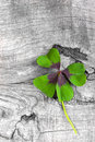 Moments of happiness stock photo with four leaf clovers wooden background leaves Royalty Free Stock Photography