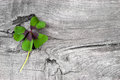 Moments of happiness stock photo with four leaf clovers wooden background leaves Stock Image